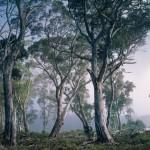 Fantasy Forest Fotobehang